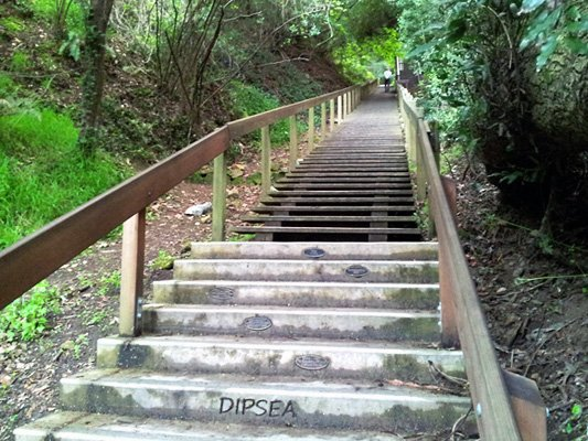 Famous Dipsea steps on the way to club