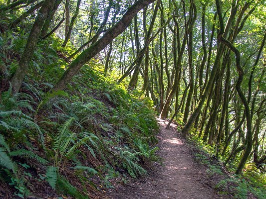 Redwood Trail to club